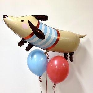 hund med trøje ballon box